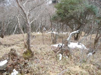 2007-1-31-093.jpg