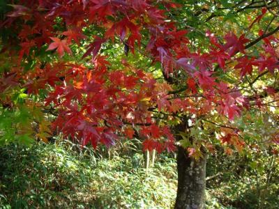 2007-10-28-037.jpg