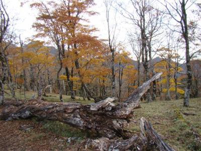 2007-11-04-013.jpg