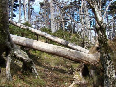 2007-11-04-224.jpg