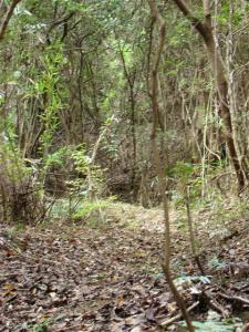 2007-11-10-008.jpg
