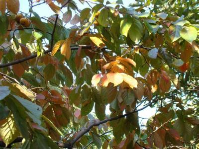2007-11-10-092.jpg