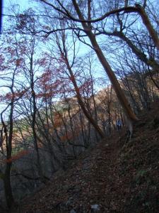 2007-11-17-027.jpg