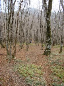 2007-11-17-058.jpg
