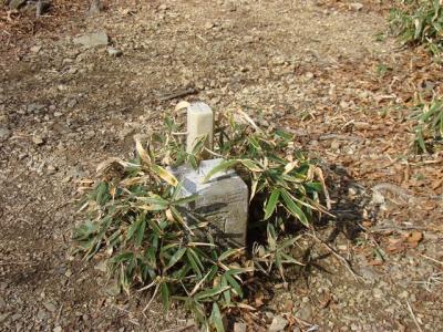2007-11-17-091.jpg