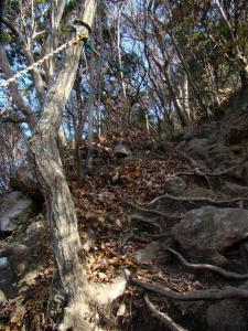 2007-11-24-070.jpg