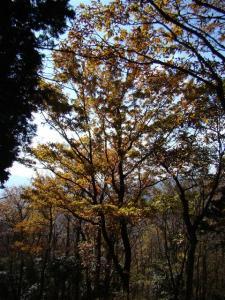 2007-11-24-151.jpg