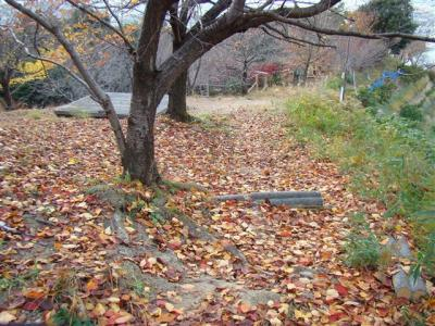 2007-12-01-140.jpg