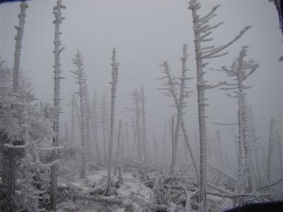 2007-12-09-100.jpg