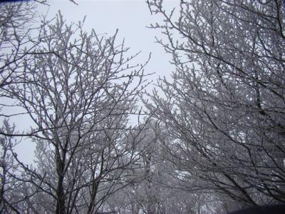 2007-12-09-166.jpg