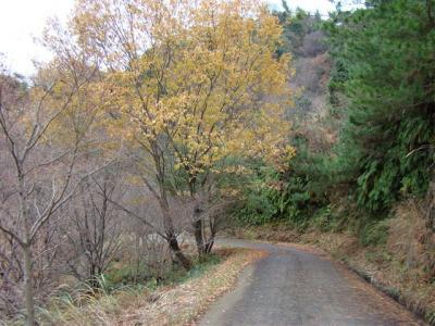 2007-12-23-146.jpg