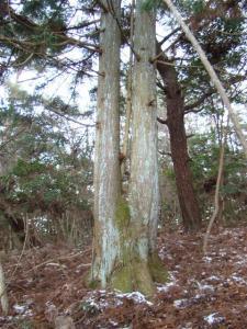 2008-01-02-064.jpg