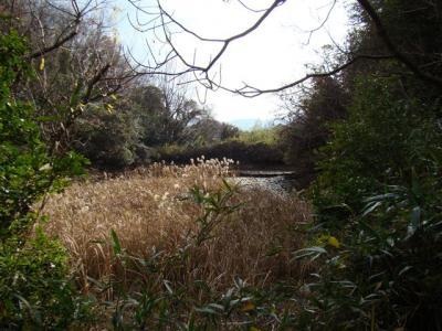 2008-01-04-042.jpg