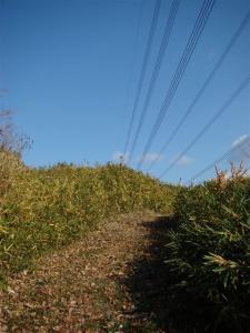 2008-01-04-076.jpg