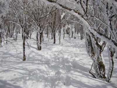 2008-01-05-133.jpg
