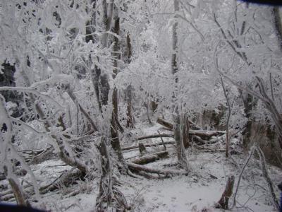 2008-01-14-035.jpg
