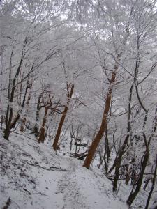 2008-01-14-143.jpg