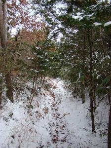 2008-01-27-163.jpg