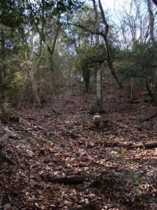 2008-02-01-030.jpg