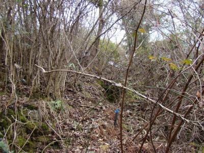 2008-03-01-017.jpg