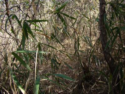 2008-03-01-037.jpg