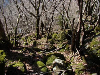 2008-03-15-030.jpg