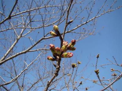 2008-03-22-004.jpg