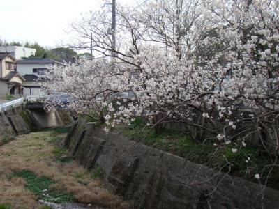 2008-03-22-168.jpg