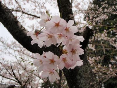2008-04-09-063.jpg