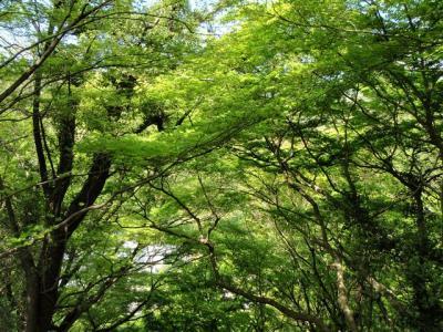 2008-04-20-024.jpg