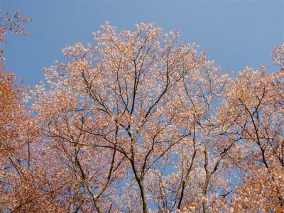 2008-04-26-019.jpg