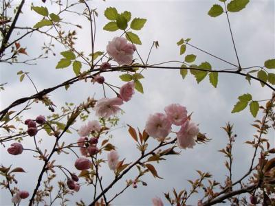 2008-04-26-208.jpg
