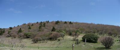 2008-05-03-p4.jpg
