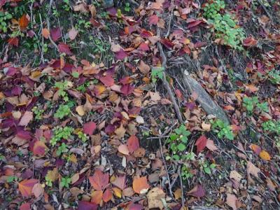 2008-10-19-016.jpg