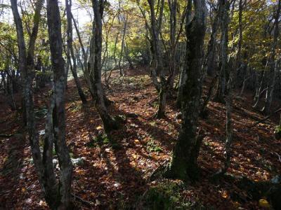 2008-10-19-042.jpg