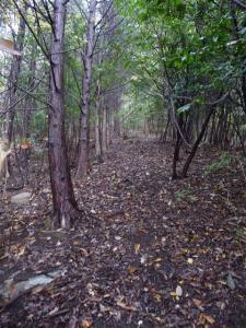 2008-11-15-020.jpg