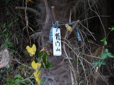 2008-11-15-111.jpg