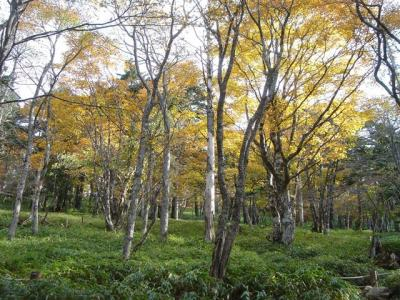 4domenooodaigahara020.jpg