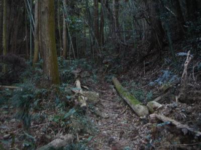 hoike-idakiso036.jpg