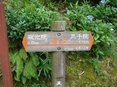 oohara256.jpg