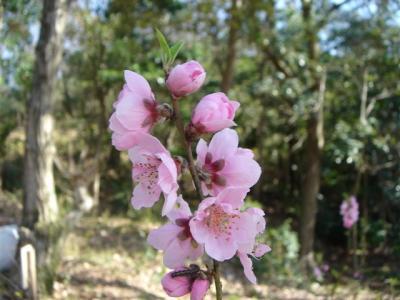 yorunonagusayama033.jpg