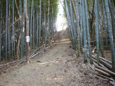 yorunonagusayama034.jpg