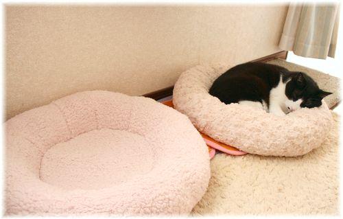 お気に入りのベッドですやすや・・・♪