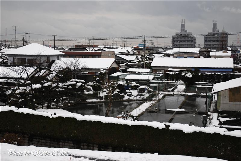 西条市の雪景色 市内各所にて 2008.01.21