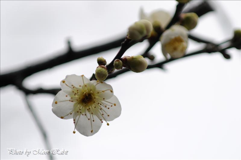 金剛院の山門 西条市福武新田 2008.02.12