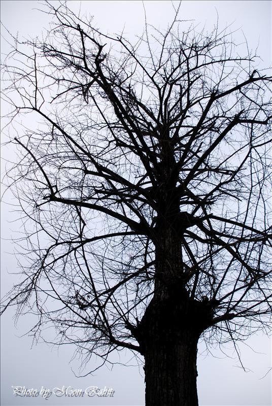 金剛院の七重石塔 西条市福武新田 2008.02.12