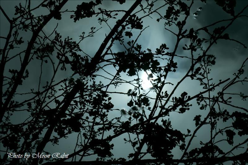 広瀬公園・旧広瀬邸・広瀬歴史記念館の桜 新居浜市上原 2008.04.02