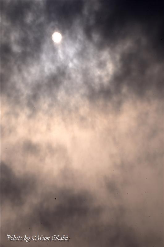 山根公園・市民グラウンド・大山積神社・別子銅山記念館のサクラ 新居浜市角野新田町 2008.04.02