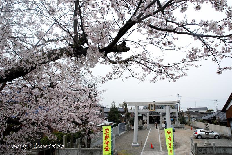 嘉母神社の桜・祭礼・手洗水 西条市禎瑞中 2008.04.06