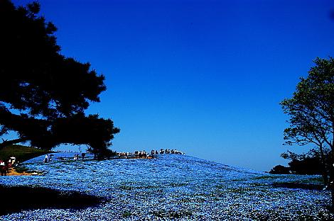 ひたち海浜公園 みはらしの丘